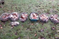 Nos champignons cueillit par nos soins